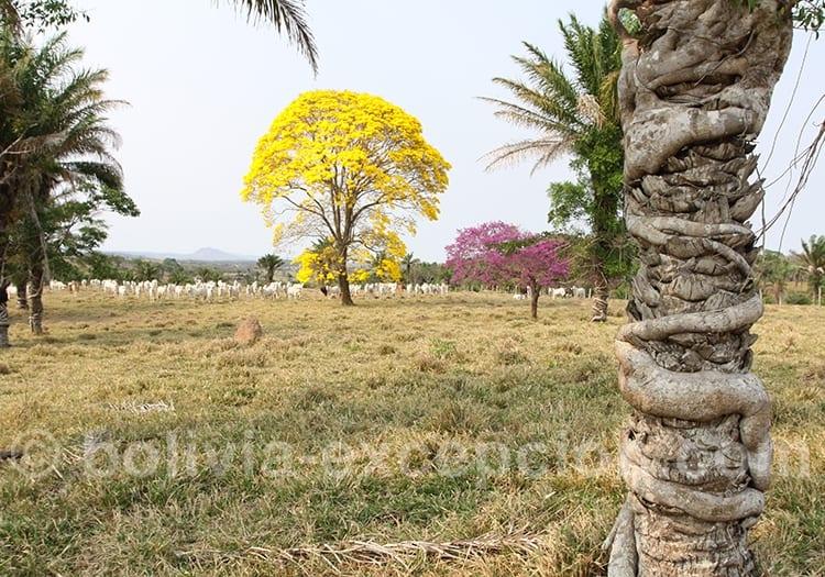 Septembre, le printemps en Bolivie