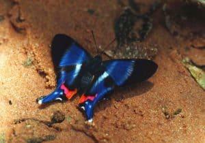 Observation papillons, parc amboro