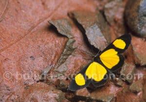 Photographie papillons parc Amboro