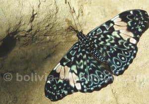 Papillons réserve Amboro