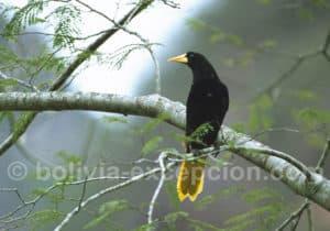Observation oiseaux, parc Amboro