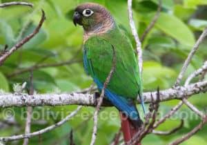 Bird watching, parc Amboro