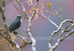 Les oiseaux du parc Amboro