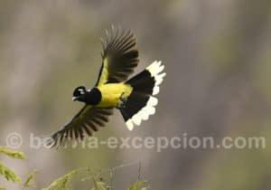 Photographie faune aviaire à Amboro