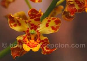 Orchidées, parc Amboro