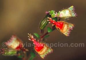 Flore du parc Amboro