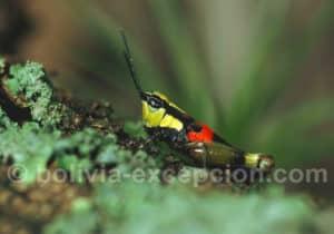 Photos insectes, parc amboro