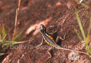 Faune endémique à Amboro