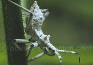 Nature et insectes du parc Amboro