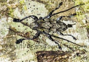 Insecte, parc Amboro