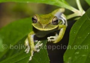 Observation amphibiens, parc Amboro
