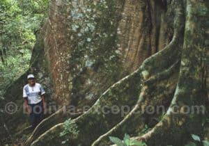Excursion en forêt, refuge Los Volcanes, Amboro
