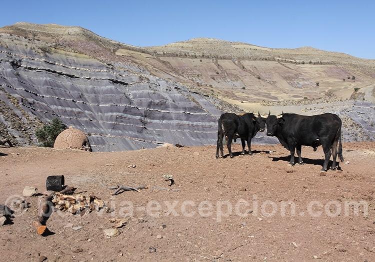 Circuit de deux semaines en Bolivie