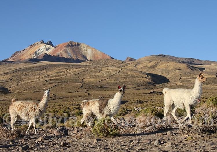 Tourisme en famille en Bolivie