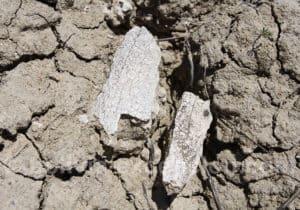 Animal préhistorique du Pléistocène, Uriondo en Bolivie