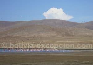 Safari photographique animalier à lagune Tajzara