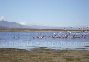 Réserve de Sama 41 espèces d'oiseaux dont 3 espèces de flamants roses