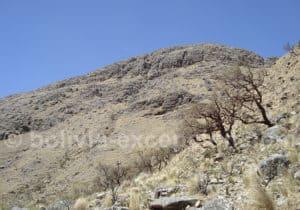 Arbre Polylepis appelé en quechua le qiwiña