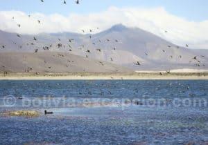 Tarija à la lagune Tajzara 88 km