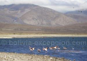 Tupiza à la lagune Tajzara 145 km