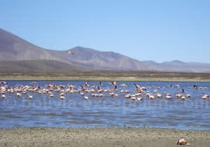 Birdwatching à lagune Tajzara