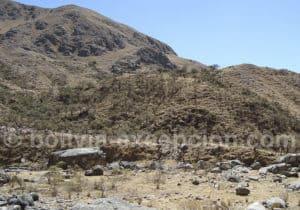 Forêt de queñuas sur le chemin inca de Tarija