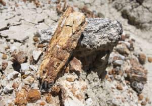 Route de la paléontologie en Bolivie