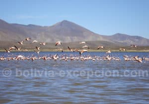 Observation aviaire à lagune Tajzara