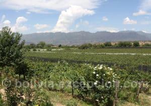 Région des vins bolivien