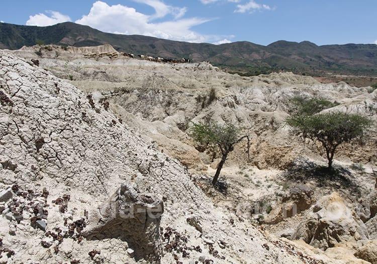 Rujero, un des gisements fossilifères plus importants d'Amérique du Sud