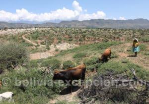Bergère dans la vallée de Tarija