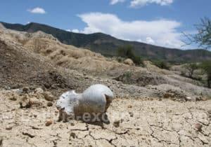 Restes d'animaux préhistoriques, vallée centrale de Tarija