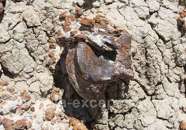 Rotule, site paléontologique de Rujero