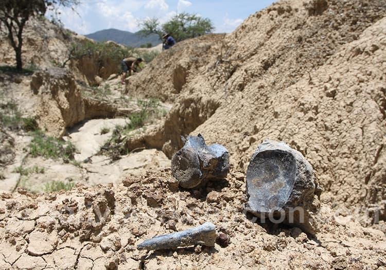 Restes de mastodonte, gliptodonte, mylodontidae, megatherium à Rujero