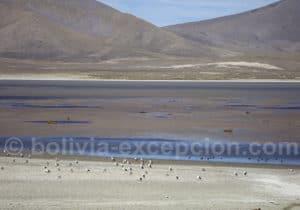 Aire protégée de Sama, région Tarija