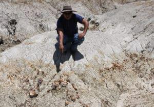 Tarija berceau paléontologique des Amériques