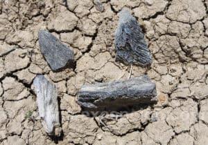 Fossiles du Quaternaire, troisième période géologique de l'ère du Cénozoïque