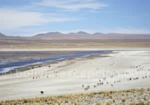 Lagune Tajzara, région Tarija