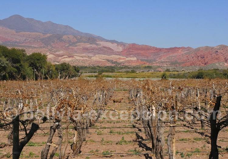 Vignoble dans la Quebrada de Las Conchas à Cafayate, Salta